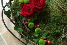Nelson flowers
