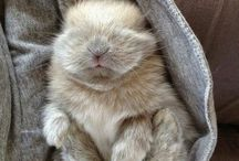 It's a bunnyful life