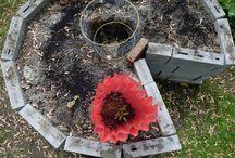 Central Otago vege garden
