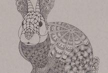 conigli