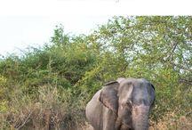 Sri Lanka Travel Inspiration