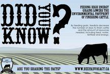 Canadian Beef Industry / Canadian Beef industry information