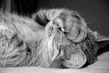 Cats / by ellabellalou