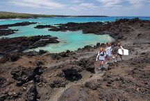 The Trip 2015: Hawaii / Enter daily for a chance to win The Trip 2015: Hawaii!   / by Travel Channel