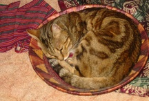 Homage to Mati / Fellow traveller for 14 years. Bengal cat. Wise and opinionated with an engaging sense of humor. She is missed.