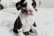 ~pups~ / puppies!!