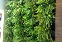 parede plantas