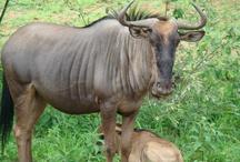 Zuid Afrika natuur
