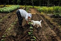 Organic gardening with pets