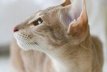 Felini / Animali stupendi