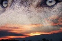 My Wolves & their Kin....... / by Rosie Merrill