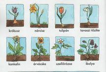 környezet.tavaszi viràgok
