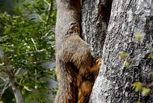 squirrel loven / by Nikki Murgz