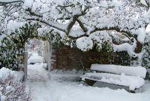 Gardens: Winter / Le jardin en hiver