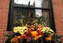 autumn window box ideas