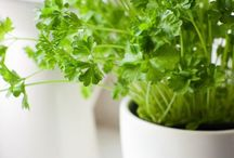 Balcony Herbs