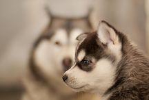 Pets  / by Kayla Peiffer