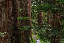 Japon : Spirituel