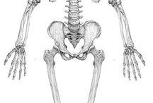 骨格 筋肉 参考