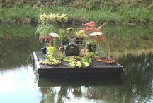 Läckra bladverk / Bladverk i ett fyrverkeri av färger, bland annat med bilder på Alunrot (Heuchera) och Japanska lönnar. Bladverk som ger en spännande kontrast i planteringar och i krukor.