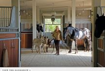 Horse's / Horse's