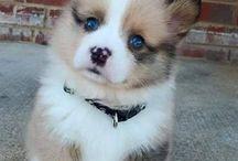 Cute PUPY