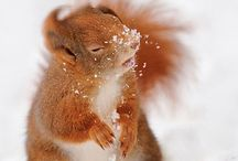 Oh Squirrels / by Emma Filipkowski