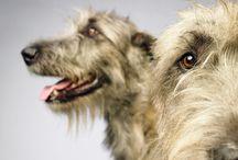 Hundetraining und Tricks