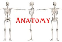 Anatomy / Homeschool lessons and experiments in anatomy