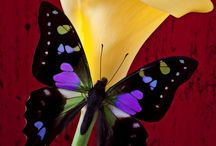 THE BUTTERFLIES AND FLOWERS / butterflies and flowers