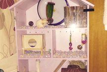 hamster stuff / by JayBay200