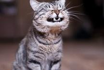I love cats !