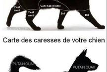 Conseil animaux