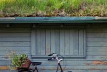 Photogenic Bicycles