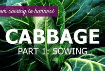 From sowing to harvest - tutorials