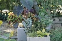 Garden / by Cathy Eisenberg