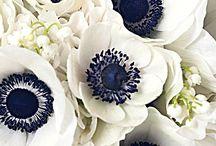 Spring Wedding flowers Sept-Nov / Spring Seasonal flowers availability