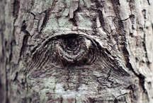 The Beauty of Trees