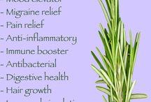 Benefits of-: Rosemary