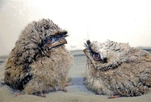 Birds I love♪