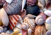Sea, beach, shells