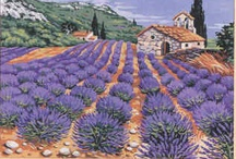 Lavender draw, paint