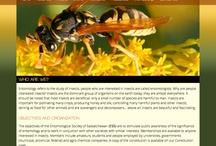 Website Design / © 2012-2014 Definitive Design & Photography. All rights reserved.  / by DefinitiveDP