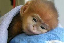 snuggle time / by Rachel Howard