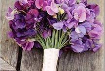 Violet , Indigo / Violet, lavender, lilac, purple, indigo