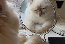 f / cats.