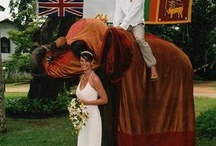 Sri Lanka Weddings