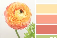 Color Inspiration / by Tamytha Jenkins