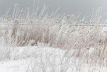 Beautés hivernales