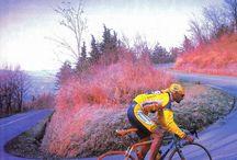 Profi / pros profiles in cycling